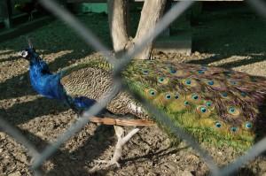 atrakcje-mini-zoo